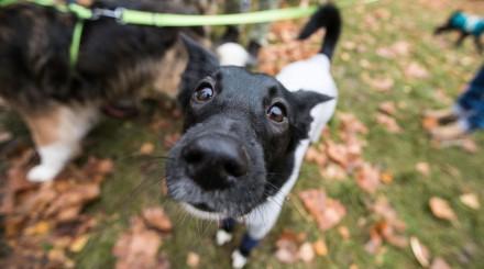 «За чистый парк!» Парк «Сокольники» призвал собаководов присоединиться к акции