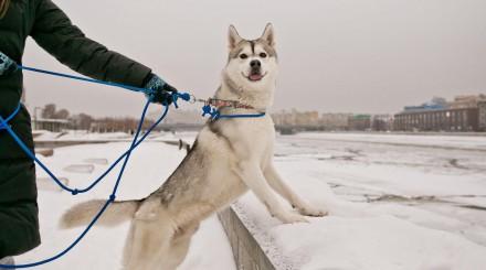 Собаки в большом городе: как устроен сервис «Собака-гуляка»?