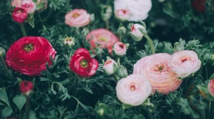 Красивые сады для фотосессий: подборка ParkSeason
