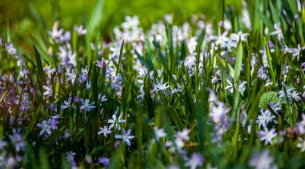 Ранняя весна в московских парках: Instagram-подборка ParkSeason