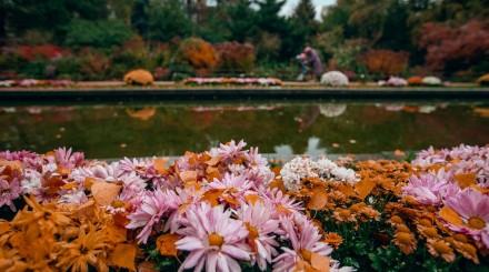 Фото: золотая осень в «Аптекарском огороде»