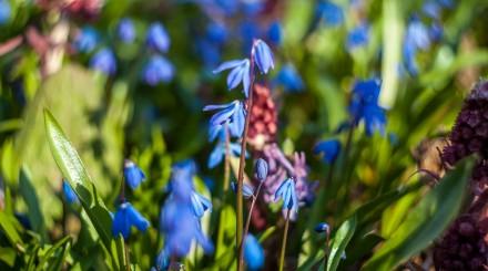 Сад Шекспира и священное дерево: красивые аккаунты ботанических садов