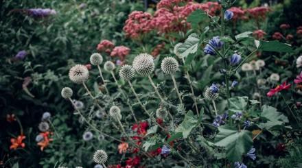 «Аптекарский огород» летом: экоплощадка, бельведер и сенсорный огород