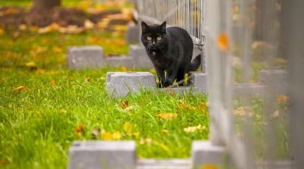 Как живут садовые и парковые котики в условиях карантина?