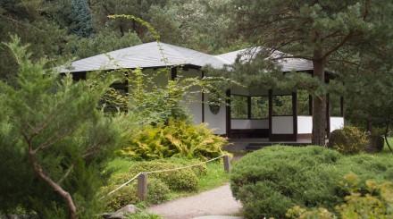 6 поводов зайти в Ботанический сад имени Н. В. Цицина