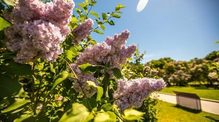 Что делать в Сиреневом саду: инструкция ParkSeason