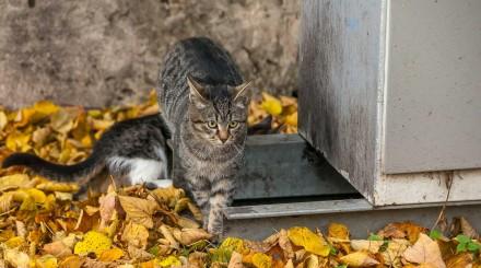 Фото: кошки помогают монтировать каток в парке Горького