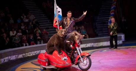 Выступление труппы Филатовых в сочинском цирке