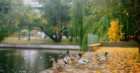 Выставка «Невидимые профессии парков Москвы»