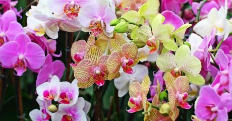 Фестиваль орхидей, хищных растений и суккулентов «Тропическая зима»