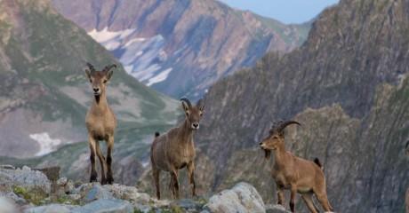 Выставка «Природа Западного Кавказа»