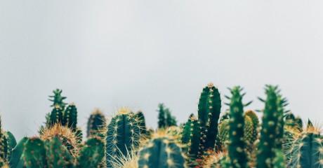 Выставка кактусов и суккулентов в Ботаническом саду