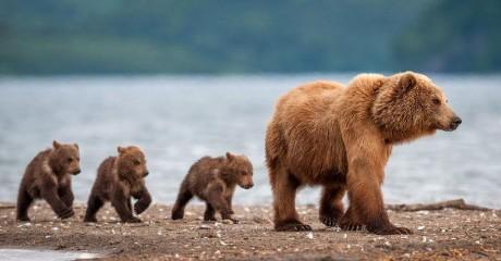 Фотовыставка журнала National Geographic «Дикая природа России»