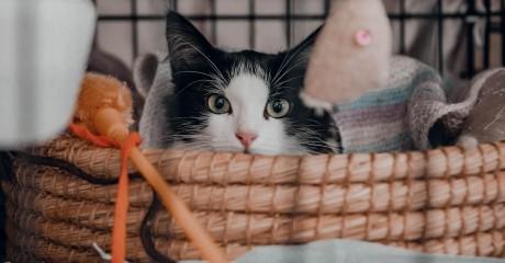 Благотворительный фестиваль «Кошки-Мышки»