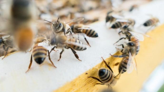 В Московском зоопарке установили домики для пчел