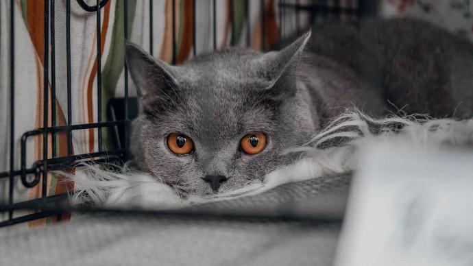 Ветеринары объяснили, как понимать «кошачий язык»