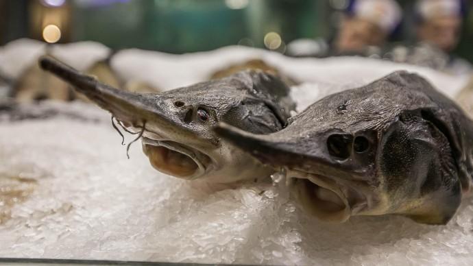 Рыбная ярмарка пройдет в Минске на выходных