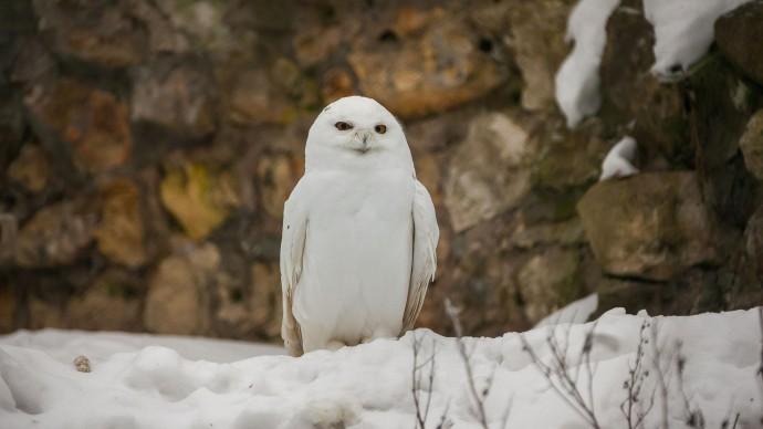 В Московском зоопарке отпразднуют международный День птиц