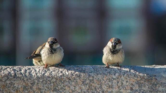 Эксперты рассказали, сколько видов птиц обитает в Москве