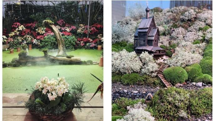 Выставка «Японский сад, Царство мхов и новогодние растения» продлена на 2 дня