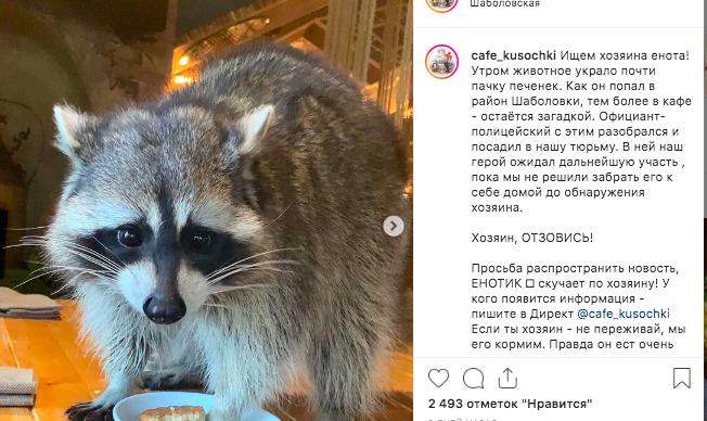 Кафе в центре Москвы ограбил потерявшийся енот