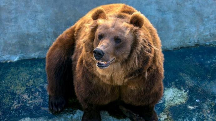 В Московском зоопарке проснулись медведи