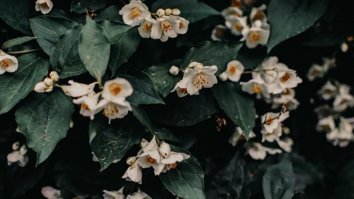 В Сочи зацвели летние растения
