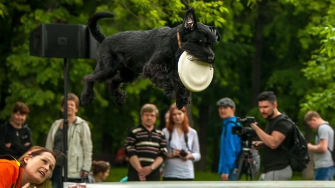 В Воронцовском парке проведут фестиваль «Собаки в городе»