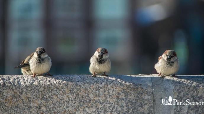 Таганский парк проводит акцию «Птичье кафе»