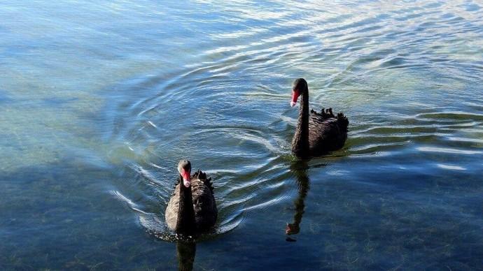 Черное озеро наполнят чистой водой