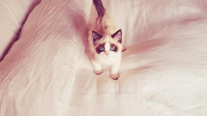 Тейлор Свифт запатентовала собственного кота