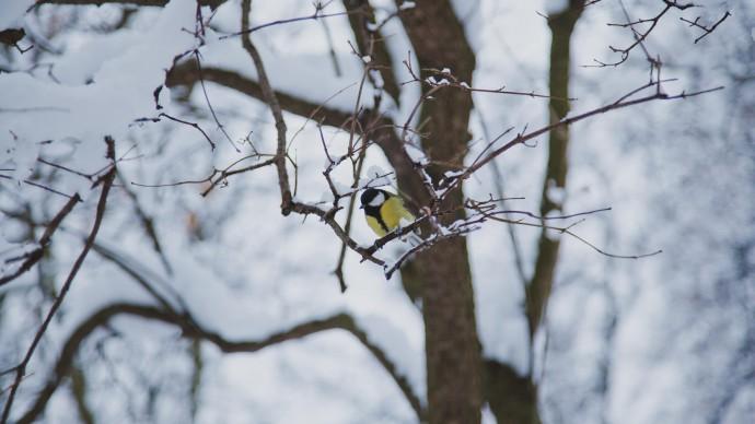 Орнитолог парка «Сокольники» рассказала, чем можно подкармливать птиц в морозы