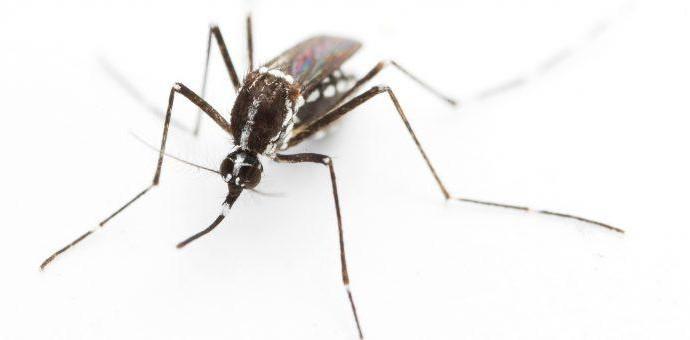 Эпидемиологи предупредили о нашествии комаров, переносящих смертельные вирусы