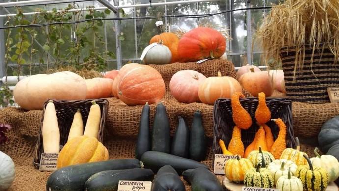 В «Аптекарском огороде» продолжается фестиваль «Краски осени»