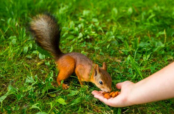 У белок и зайцев в природных парках Москвы началась сезонная линька