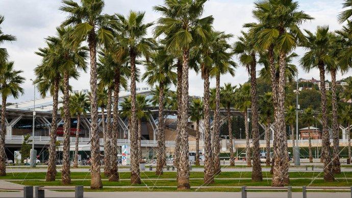 В Олимпийском парке приводят в порядок пальмы