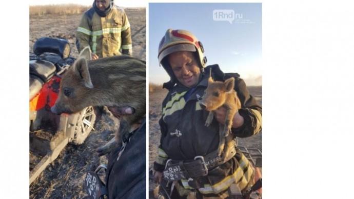 Российские пожарные спасли из огня трех диких поросят