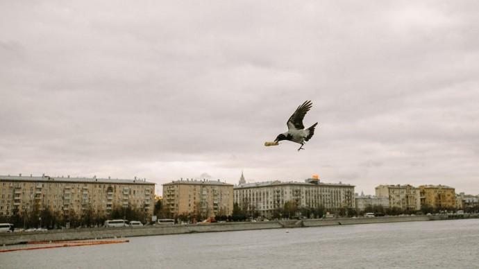 Птицы в Москве продолжают жить по летнему режиму