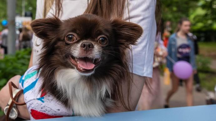 В «Депо» устроят вечеринку для маленьких собак
