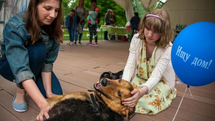 В парке «Кузьминки» проведут выставку-пристройство собак из приюта