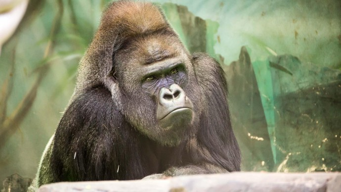 Московский зоопарк устроит для посетителей «Эко-выходные»