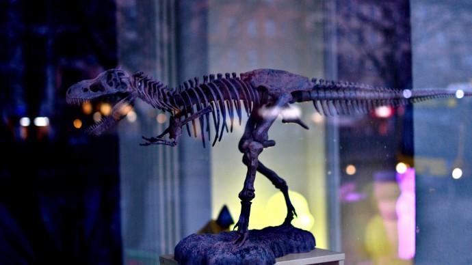 В Китае ребенок нашел 11 яиц динозавра возрастом 66 миллионов лет