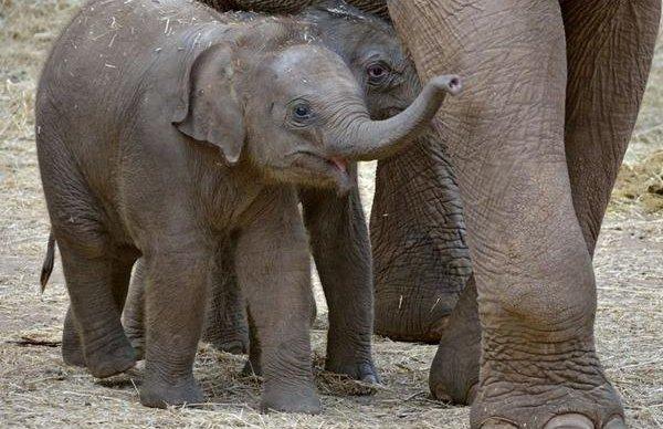 В Московском зоопарке родился азиатский слон