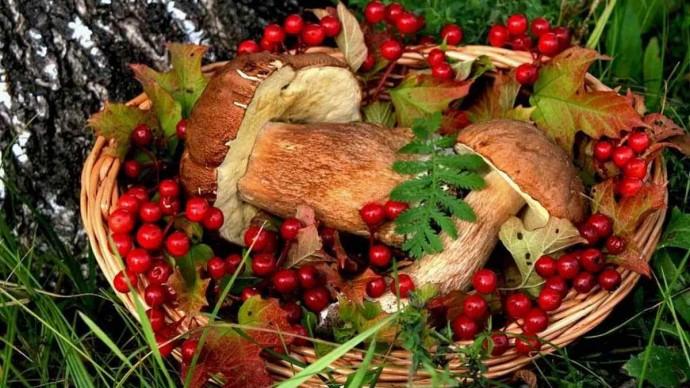 Фестиваль грибов и ягод пройдет в парке им. Бабушкина