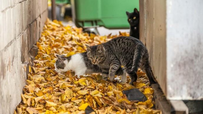 Эксперты выяснили, что настроение кошек считывают только 13% людей