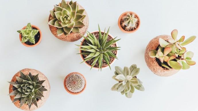 Маркет растений «Подоконник»