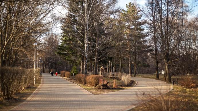 Москвичей предупредили о пылении березы