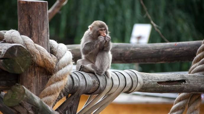 В Московском зоопарке родился детеныш японской макаки
