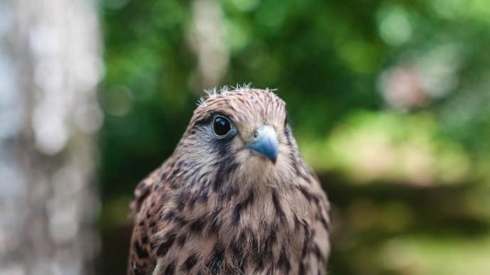 День птиц отметят в московских парках