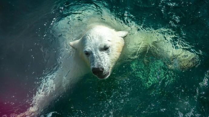 Гости парка «Фили» побывают на Арктическом зимнем фестивале
